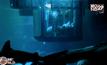 สัมผัสประสบการณ์ใต้น้ำร่วมกับฉลาม 1 คืน