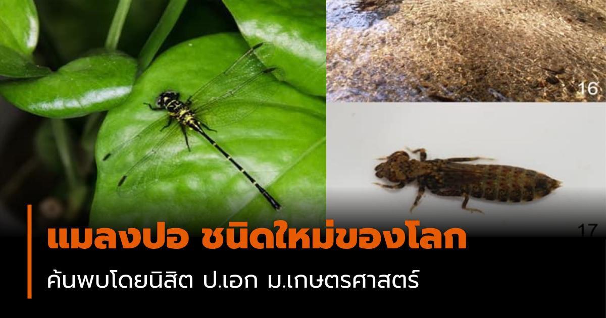 แมลงปอ ชนิดใหม่ของโลก ค้นพบโดยนิสิต ป.เอก ม.เกษตรศาสตร์