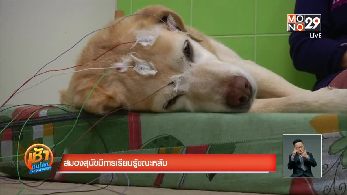 สมองสุนัขมีการเรียนรู้ขณะหลับ