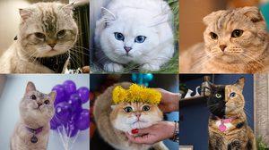 แมวดังบนโลกออนไลน์