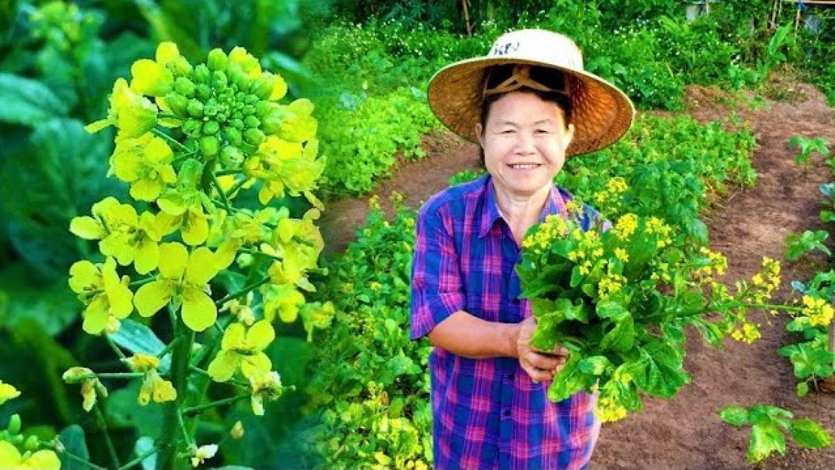 วิธีปลูกผักกวางตุ้ง : How to grow Chinese flowering cabbage : 如何种植青菜
