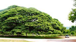 มหิดล ชวนปลูกต้นไม้ 5 ชนิด ดักฝุ่น PM2.5 อีกหนึ่งทางเลือกป้องกัน