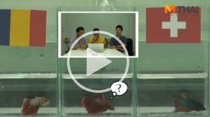 ซี้ซั้วฟันธง! ปลากัดทายผล ยูโร 2016 โรมาเนีย ปะทะ สวิตเซอร์แลนด์ (15 มิ.ย.)