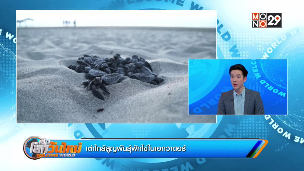 เต่าใกล้สูญพันธุ์ฟักไข่ในเอกวาดอร์
