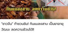 หมอแล็บแพนด้า เตือนอย่าหลงเชื่อ 'แมลงสาบ' ช่วยแก้ไข้หวัด-ลดอ้วน