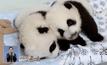 สวนสัตว์ในสหรัฐฯ เปิดให้โหวตชื่อแพนด้าฝาแฝด