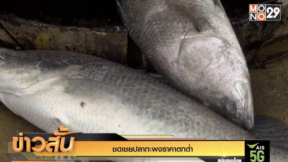 ชดเชยปลากะพงราคาตกต่ำ
