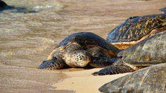 23 พฤษภาคม วันเต่าโลก (World Turtle Day)
