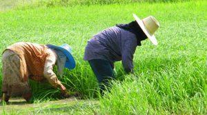 เกษตรกรเฮ! ครม.อนุมัติงบเยียวยาน้ำท่วมครัวเรือนละ 3000 บาท