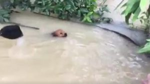 สุดซึ้ง! คลิปนาทีช่วยชีวิตสุนัข ลอยคอกลางน้ำท่วมภาคใต้