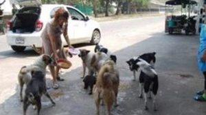 ชื่นชม! ครูใจบุญแบ่งเงินเดือน ซื้ออาหารเลี้ยงสุนัขจรจัด นานกว่า 15 ปี