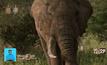 สิ่งประดิษฐ์ที่ใช้ไล่ช้างโดยปราศจากการทำร้าย