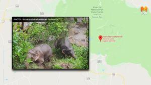 ช้างป่า รอดชีวิต 2 ตัว จากเหตุพลัดตกจากน้ำตกเหวนรก อช.เขาใหญ่