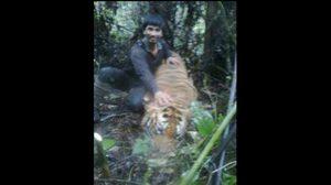 เปิดภาพพราน-นายทุน ล่าเสือป่าตะวันตก เผยเป็นระดับคิงพินในไทย