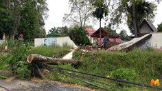 พายุถล่ม จ.ตรัง เสาไฟฟ้า-ต้นไม้ล้มขวางถนน ทำไฟฟ้าดับ