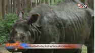 แรดอินเดียตัวเดียวในไทยที่สวนสัตว์เชียงใหม่