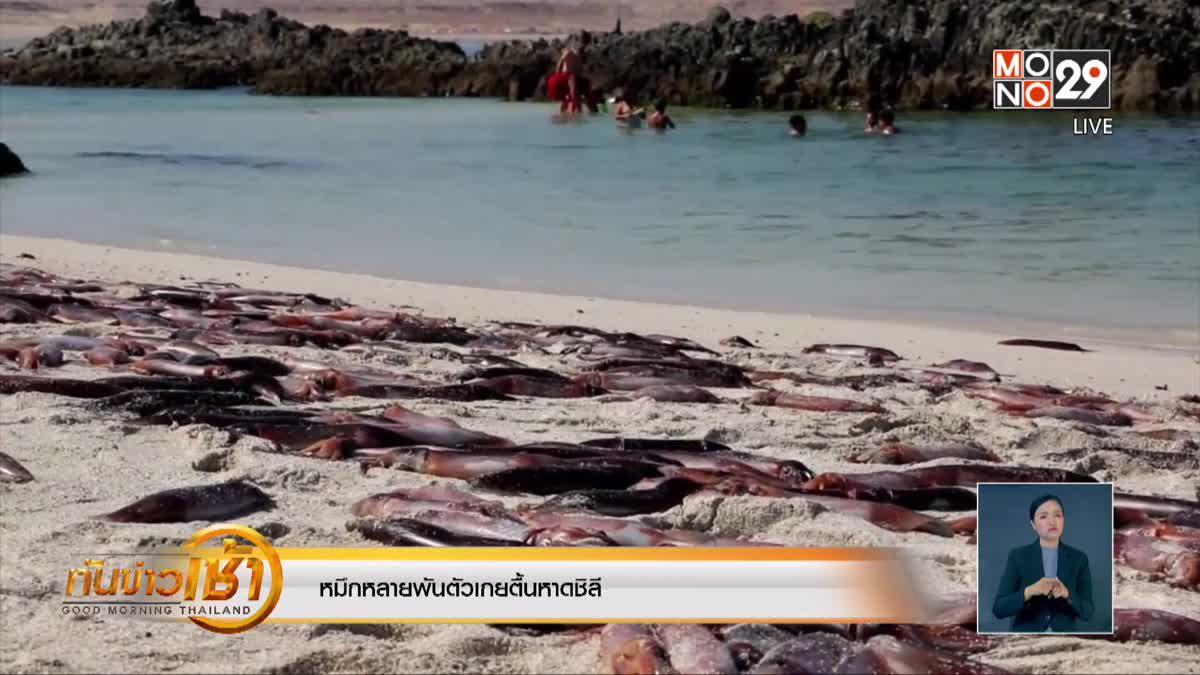 หมึกหลายพันตัวเกยตื้นหาดชิลี