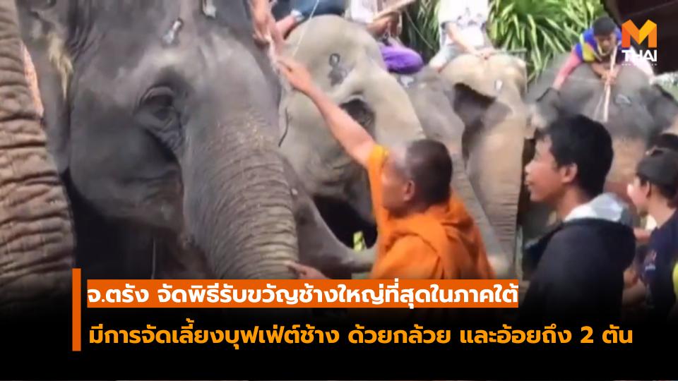 ผู้เลี้ยงช้าง จัดพิธีรับขวัญช้างใหญ่ที่สุดในภาคใต้ เพื่อตอบแทนคุณของช้าง