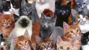 Synonyms and Replacements of Animals คำใช้แทนแปลกๆ เกี่ยวกับสัตว์ที่ควรรู้