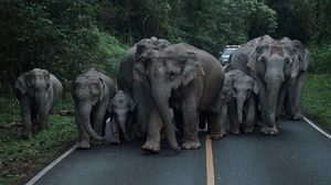 พบโขลงช้าง ประมาณ 20 ตัว ออกหากินบริเวณถนนสาย 3077