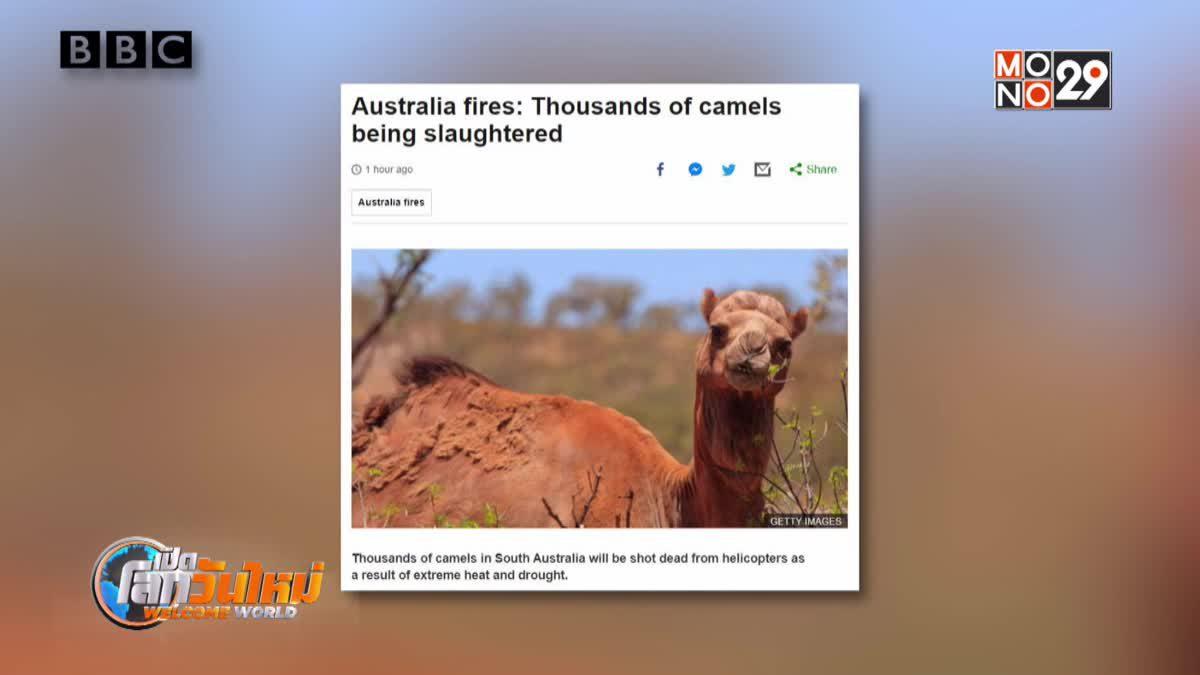ออสเตรเลียเริ่มสังหารอูฐ-ผลพวงภัยแล้ง