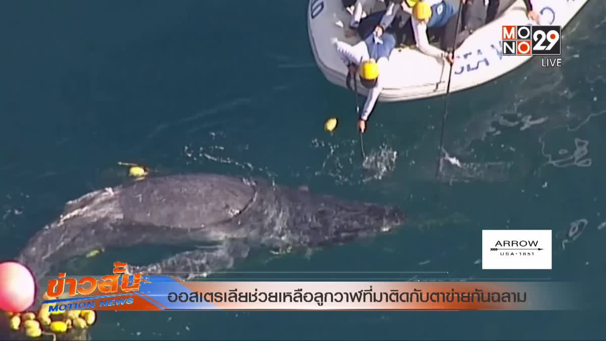 ออสเตรเลียช่วยเหลือลูกวาฬที่มาติดกับตาข่ายกันฉลาม