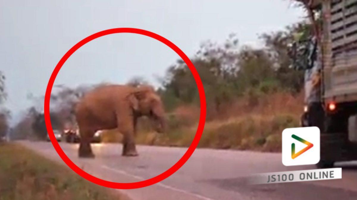 รถต้องค่อยๆขับผ่าน เมื่อเจอช้าง!!