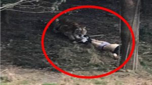หนุ่มจีนไม่ยอมจ่ายค่าตั๋ว ปีนรั้วลอบเข้าสวนสัตว์ ถูกเสือขย้ำตาย