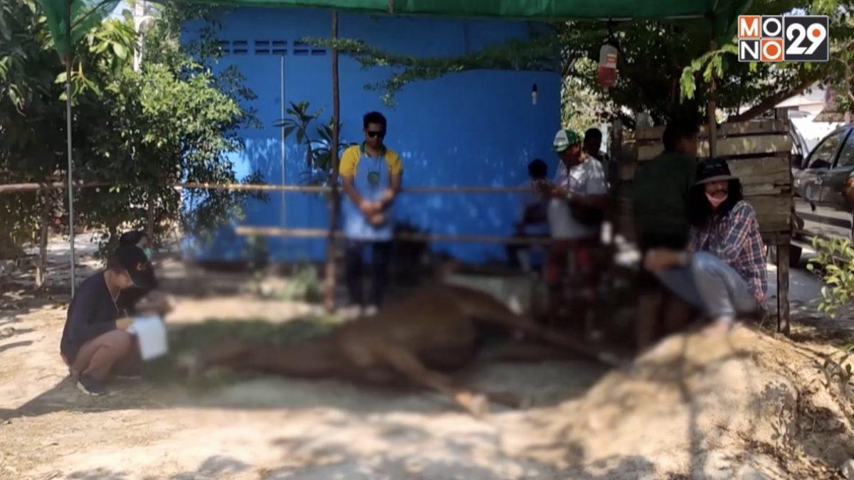 หัวหินประกาศกาฬโรคแอฟริการะบาดในม้า