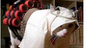 ชาวเบลเยียมสวนกลับ 'กลุ่มไอเอส' โพสต์ภาพแมวในชุดสุดฮา !!