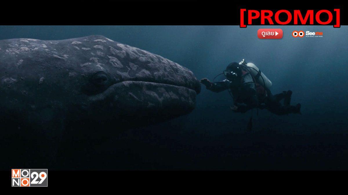 Big Miracle ปาฏิหาริย์วาฬสีเทา [PROMO]