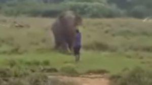 หนุ่มศรีลังกาสะกดจิตช้าง แต่ช้างไม่เล่นด้วย สุดท้ายโดนเหยียบดับคาที่