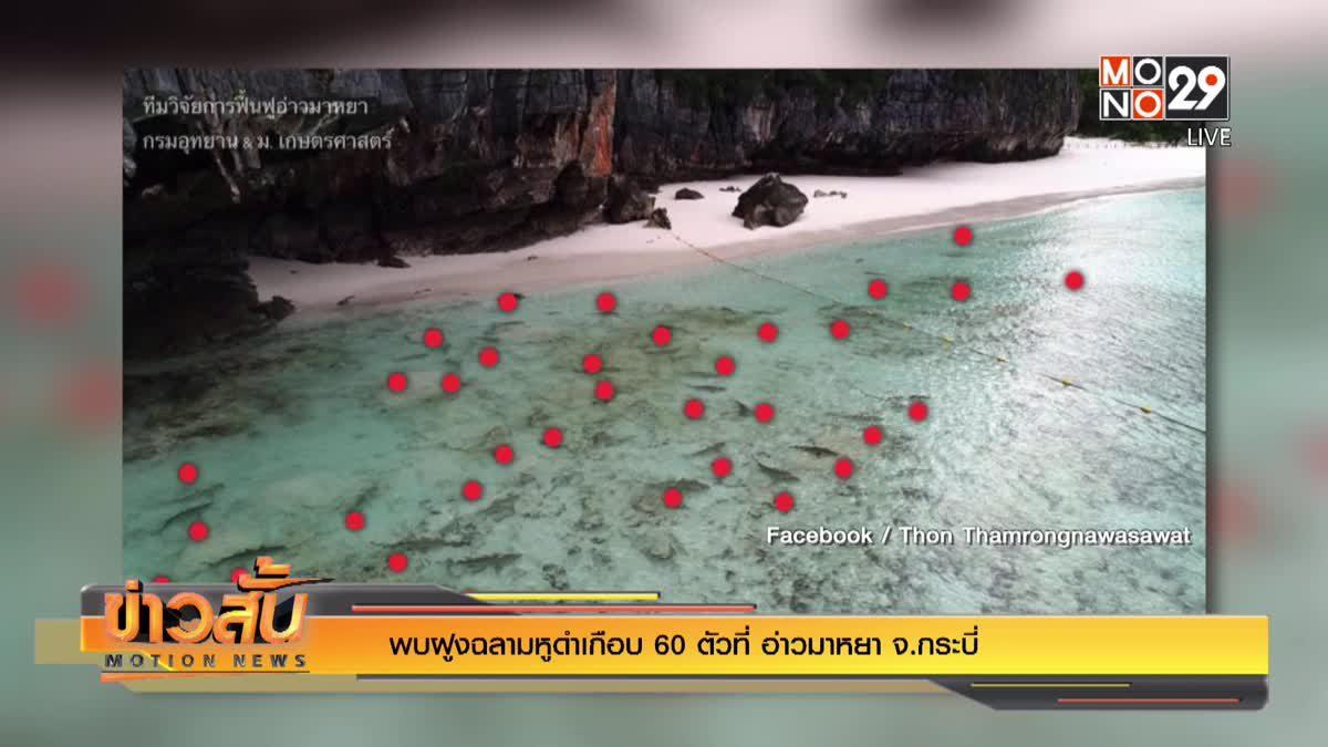 พบฝูงฉลามหูดำเกือบ 60 ตัวที่ อ่าวมาหยา จ.กระบี่