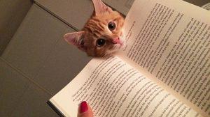 รวมภาพตัวป่วน แมวเหมียวนักอ่าน