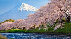 รู้ไว้ไม่ไปเก้อ! พยากรณ์ซากุระบาน ประเทศญี่ปุ่น ปี 2018