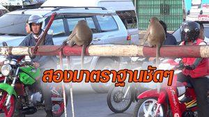 ขำหรือสงสาร! คนลพบุรีถามหามาตราฐาน เหตุลิงแกล้งแต่คนพื้นที่ไม่สน นทท.