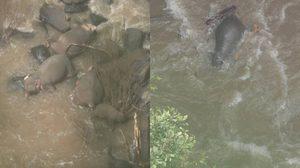ประกาศปิด! น้ำตกเหวนรก หลังช้างป่าพลัดตก เสียชีวิต 6 ตัว