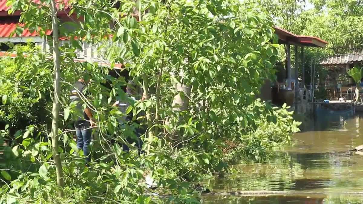 ฝ่ายปกครองสนธิกำลังตัดทำลายต้นกระท่อมทิ้งกว่า 200 ต้น