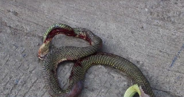 เศร้า! ร้านเครื่องเขียนถูกไฟไหม้เสียหายนับล้าน เหตุจากงูเขียวตัวเดียว