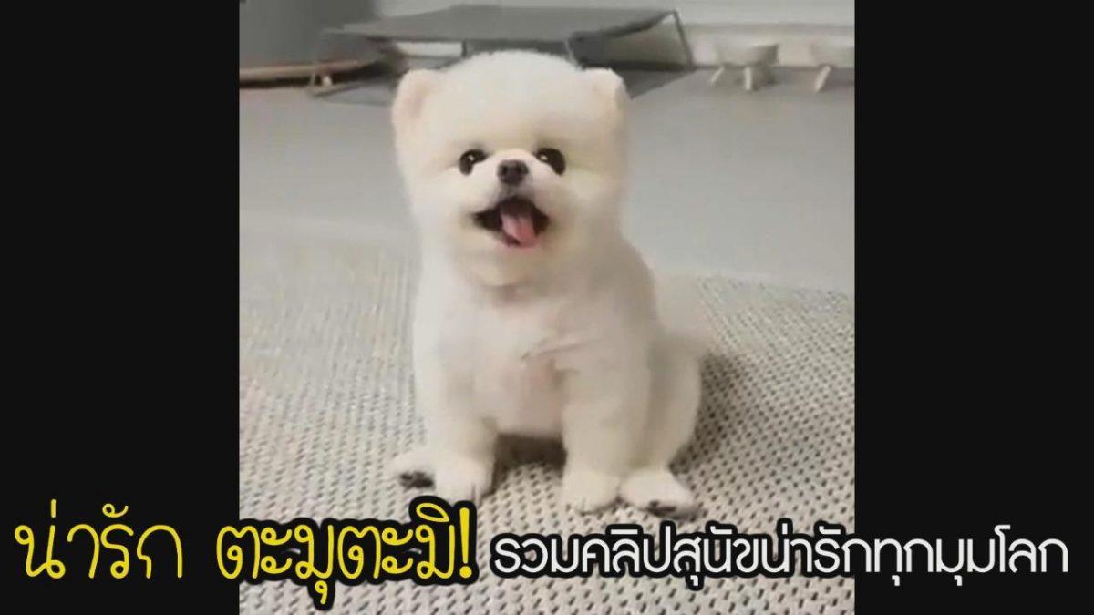 น่ารัก ตะมุตะมิ! รวมคลิปสุนัขน่ารักทุกมุมโลก
