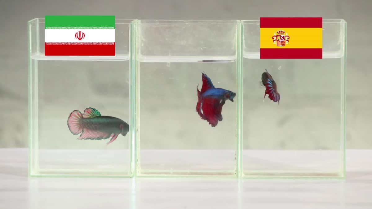 ซี้ซั้วเอามาเล่า ฟันธงบอลโลก EP5