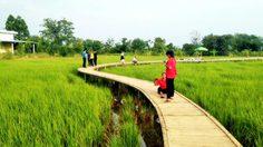 เที่ยวโคราชต้องแวะ! 'สะพานไม้ไผ่บ้านเตย' น่าเดินถ่ายรูป สูดอากาศดี๊ดี