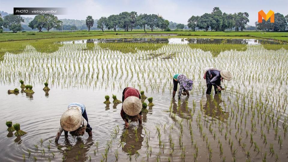 ครม. อนุมัติงบกลางฯ 869 ล้าน อุดหนุนเกษตรกรโครงการส่งเสริมปลูกข้าวอินทรีย์