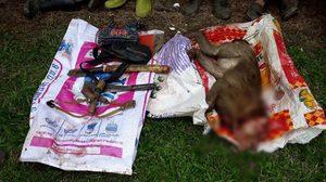 เจ้าหน้าที่บุกจับ 4 คนงานชาวลาว ฆ่าลิงกังเตรียมเปิบพิสดาร