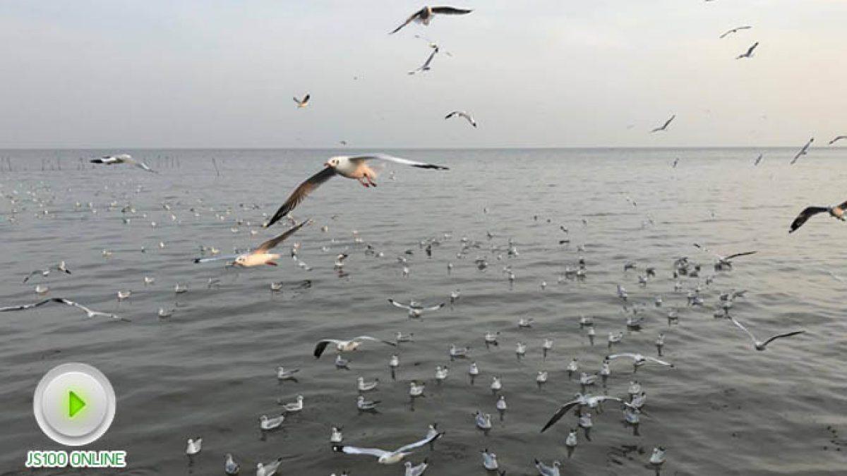 บรรยากาศยามเย็น ที่บางปู นกนางนวลเริ่มมาแล้ว (31-10-2560)