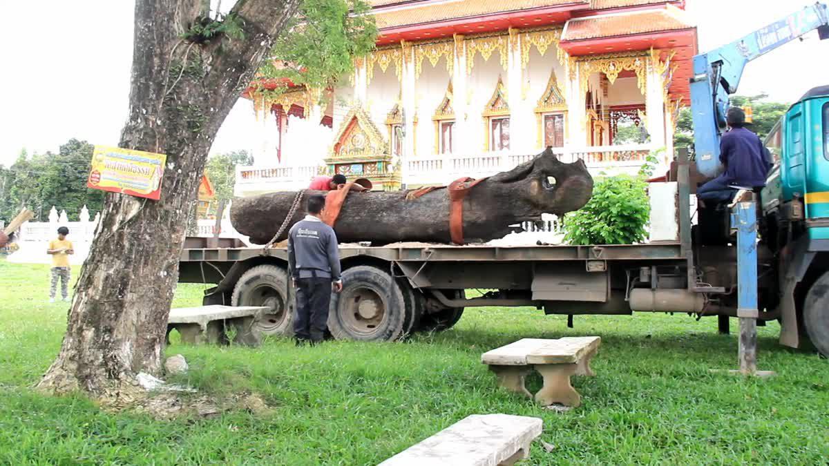 เคลื่อนย้ายต้นตะเคียน อายุกว่า 300 ปี ชาวบ้านไม่พลาดแห่ขอเลขเด็ด