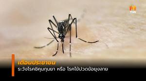 กรมควบคุมโรค เตือนระวังโรคชิคุนกุนยา พบผู้ป่วยภาคใต้มากที่สุด