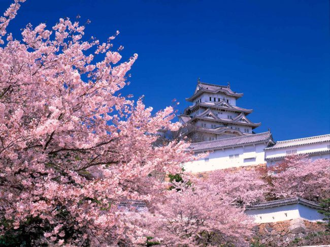 5911255-HimejiCastle_Spring-1470374131-650-435b632024-1470928479