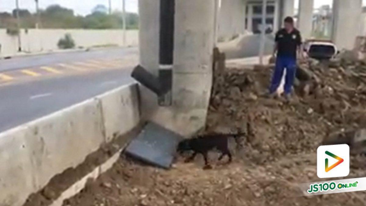 """""""ชาร์โคล"""" สุนัขตำรวจของไทย ก็หาเก่ง ไม่แพ้ชาติใดในโลกนะจ๊ะ"""