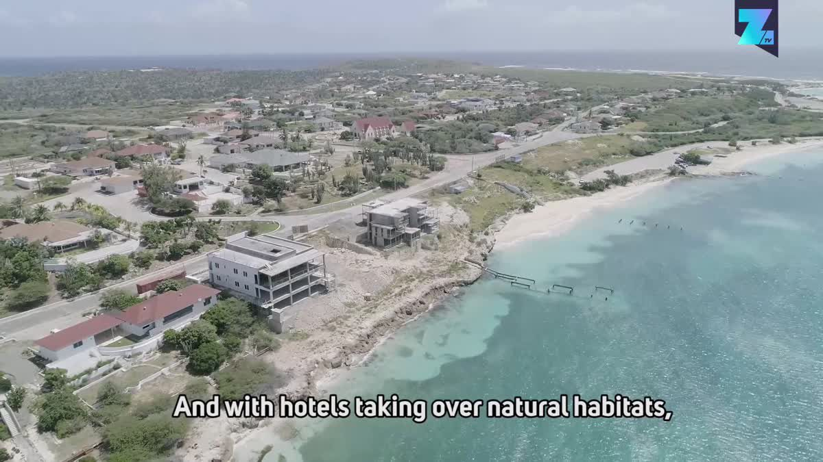Saving the owl population of Aruba